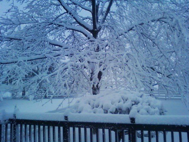 Snowy deck 2-4-12