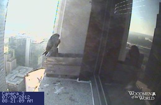 072012-falcon